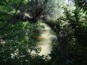 Poklidný tok Kyjovky v místech zvaných Kyseliska zhruba 2 km po proudu od Mistřína.