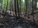 Některé stromy rostou přímo uprostřed řeky, která poměrně rychle klesá listnatým lesem.