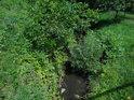 Letní pobřežní zeleň kolem Kyjovky.